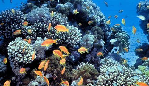 שמורת חוף האלמוגים