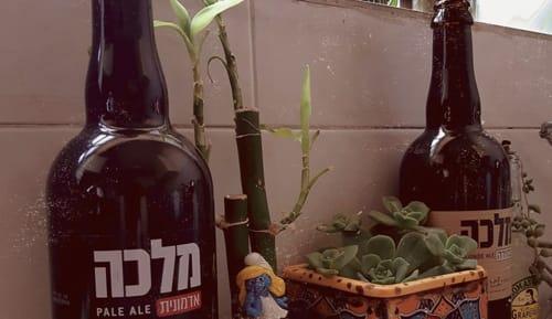 בירה מלכה - צילום - אינסטגרם בירה מלכה