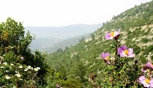 פריחה ונוף בנחל קטלב (שנת 2006), צילום: ויקיפדיה