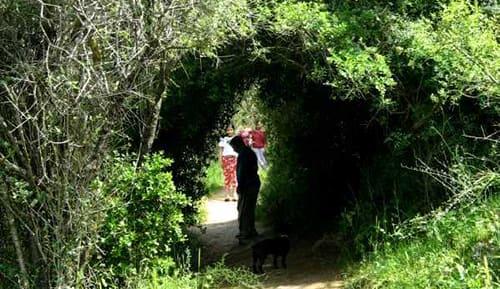 מסלול הליכה בנחל קטלב, צילום: ויקיפדיה